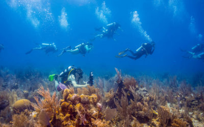 5 Ways Dive Operators Can Build a Reputation for Safety and Keep Divers Coming Back